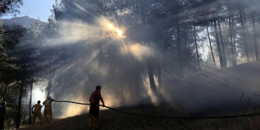 Ormanları Tehdit Eden 'Küçük' Tehlike