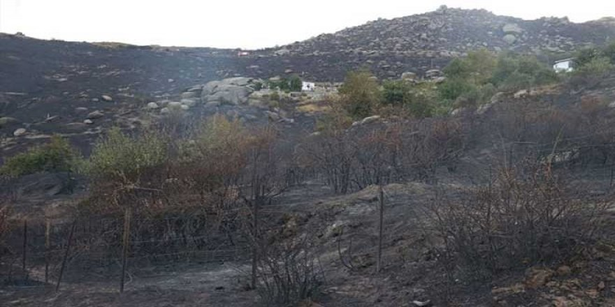 Bahçesindeki otları yakayım derken Marmara Adası'nı yaktı!