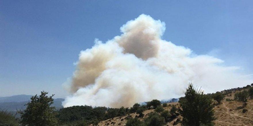 Bodrum ve İzmir'de Orman Yangınları