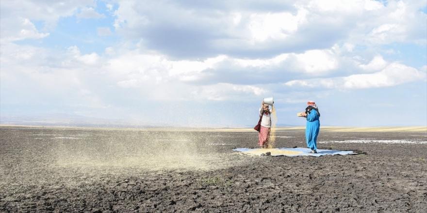 Kuruyan Kuyucuk Gölü'nde Tahıl Savurdular