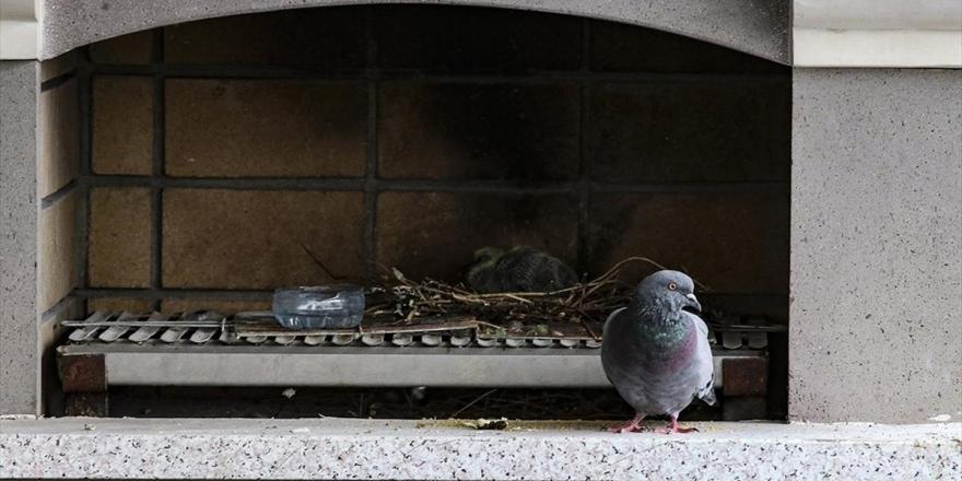 Terasına Yuva Yapan Kuş İçin Tadilata Ara Verdi