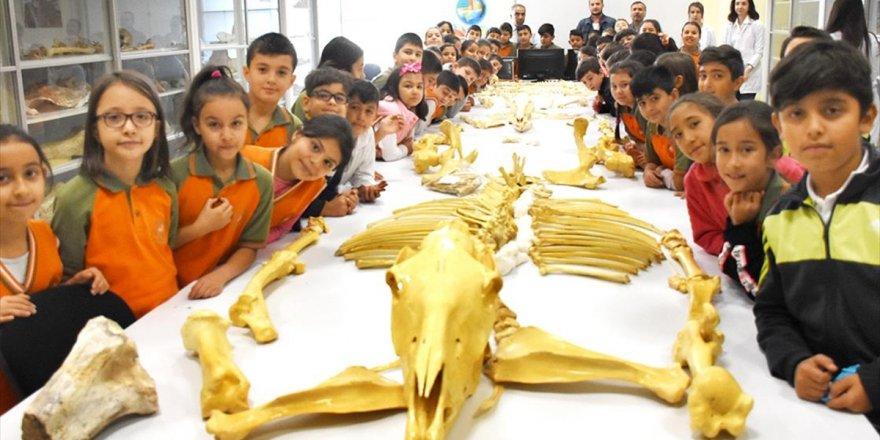 Anadolu Tarihini 7 Milyon Yıllık Fosillerin Ziyaret Ederek Öğreniyorlar
