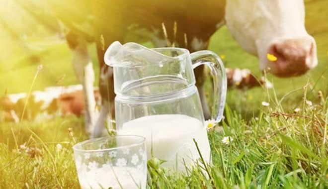 En büyük süt üreticisi iflas etti