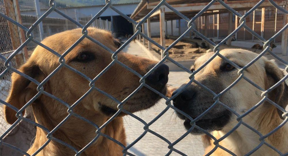 Hayvanını terk edene 10 bin TL ceza, kötü mualemeye 2 yıl hapis