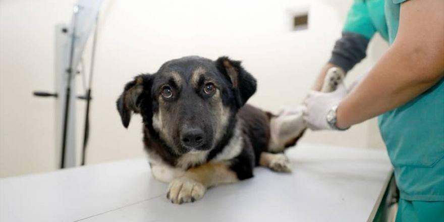 Ankara'da Hayvanlara Müdahale İçin İlk Yardım Eğitimi Verilecek
