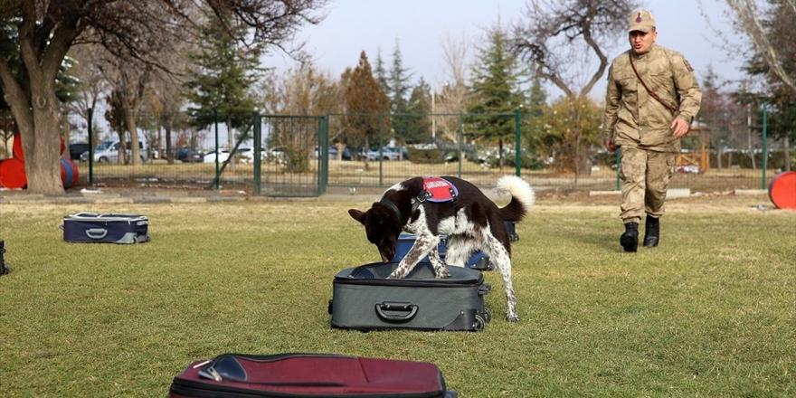 Yerli Irk Köpekler Nevşehir'deki Jakem'de Eğitiliyor
