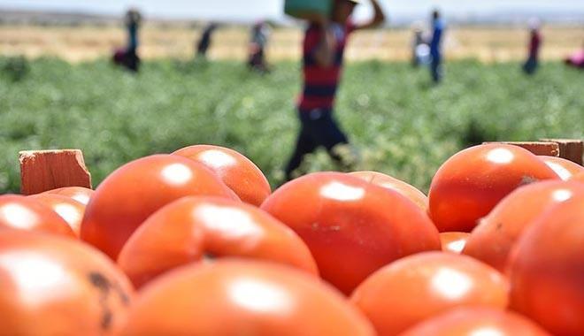 'Türkiye'de tüketilen biber, domates ve salatalıkların yüzde 15'i zehirli'