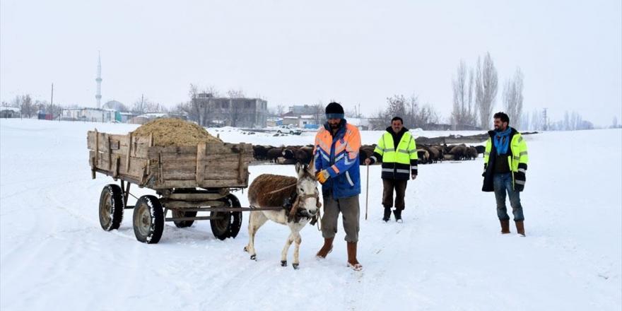 Besiciler Hayvanları İçin Kar Üstünde Kızak Ve Eşek Arabasıyla Yem Taşıyor