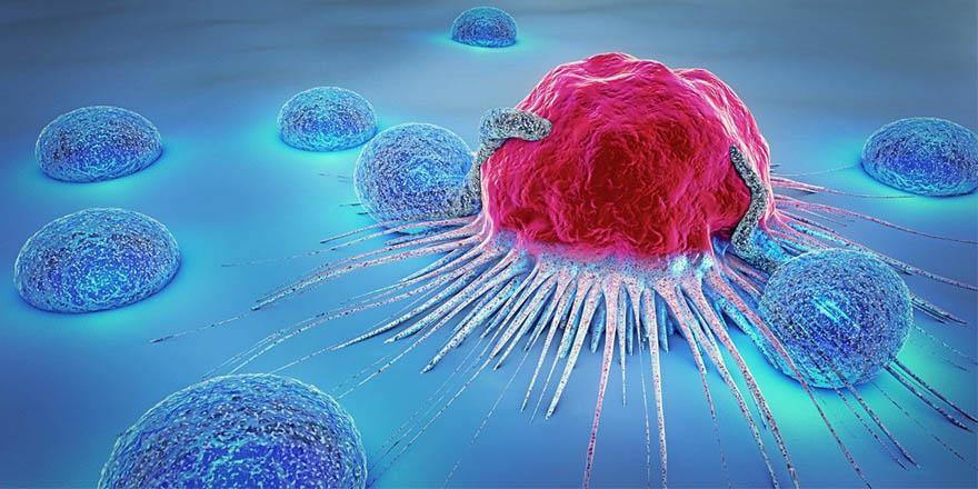 İşte 2018 Nobel Tıp Ödülü'nü Kazanan, Çığır Açan Kanser Araştırması