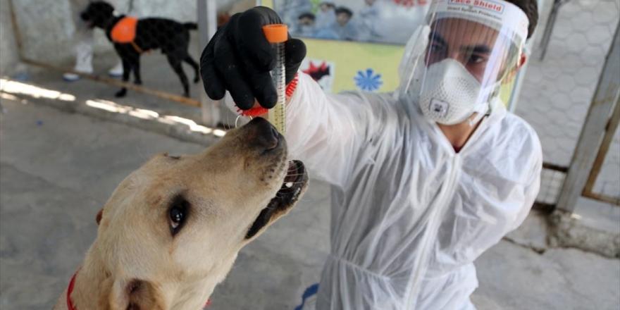 İran'da Köpekler Kovid-19'u Teşhis Etmek İçin Eğitildi