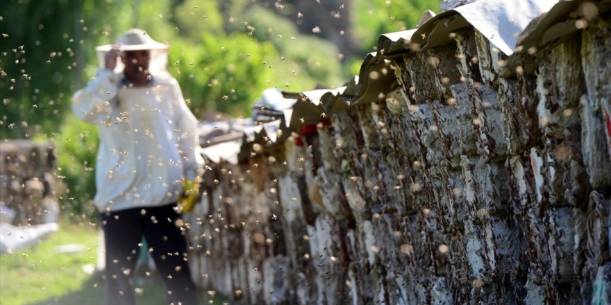 Bitlisli Arıcılar Kara Kovan Balı İçin Yaylalara Çıkmaya Hazırlanıyor