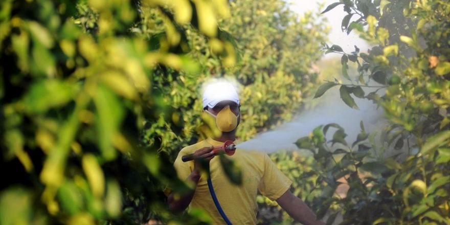 Zirai İlaçlar Böceklerin Geleceğini Tehdit Ediyor