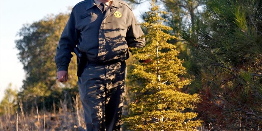 Orman Genel Müdürlüğü Geçici İşçi Alacak