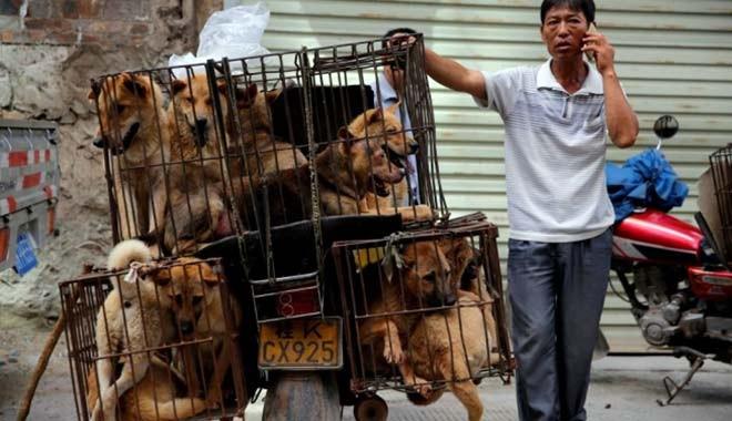 Akıllanmadılar! Çin'de köpek eti festivali tepkilere rağmen başladı