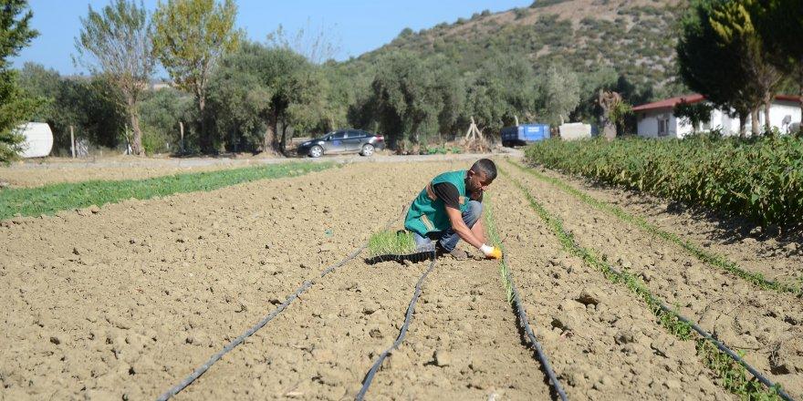 Kuşadası Belediyesi'nden Hizmet Toprağından Bereket Doğuyor
