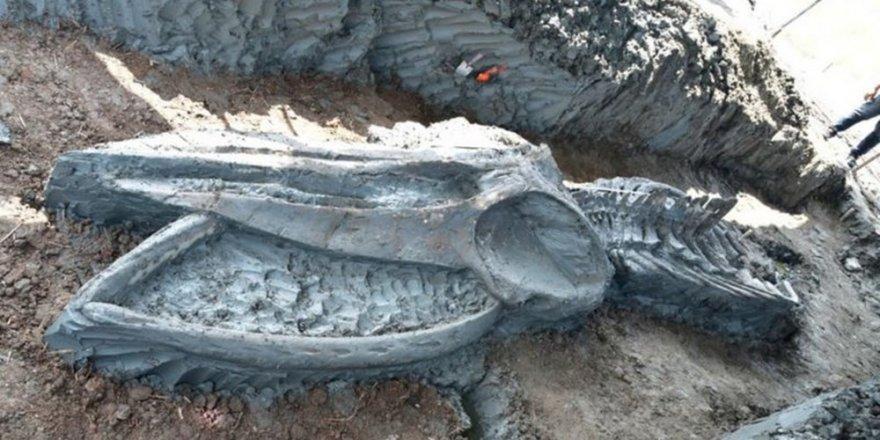 5 bin Yıllık Balina İskeleti