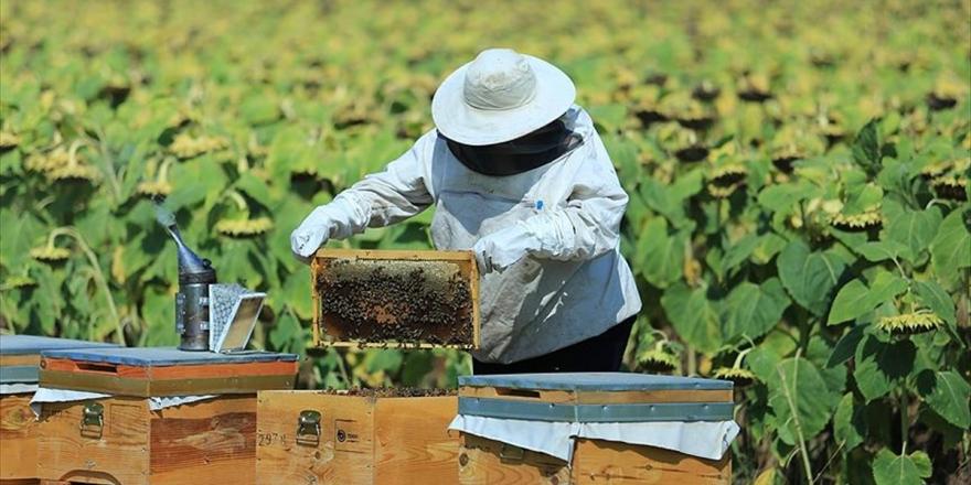 Bakanlıktan Arıcılık, İpek Böcekçiliği, Kaz Ve Hindi Yetiştiriciliği Yatırımlarına Destek