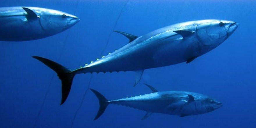 Doğan Satmış yazdı: Elalemin tek bir balığı, sizin üç yalının fiyatını geçmişse...
