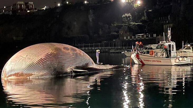 İtalya'da 70 tonluk ölü balina kıyıya vurdu: Akdeniz'de şimdiye kadar bulunan en büyüklerden biri