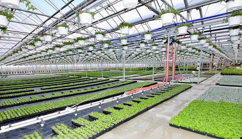 Konya kadar Hollanda'nın tarımsal ihracatı 116 milyar doları aşarak rekor kırdı