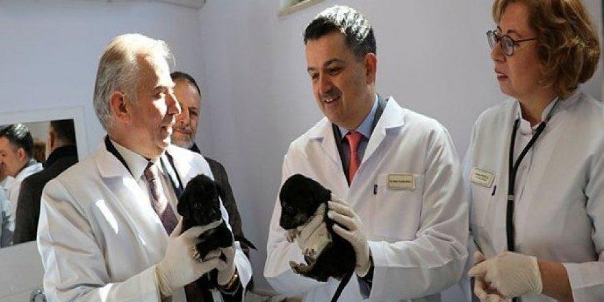 Bakan Pakdemirli: Pet shop'larda bundan sonra kedi köpek satılmayacak