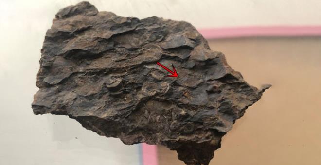 Çobanın dağda bulduğu taş, bölgede tek bir şeyin varlığına işaret ediyor