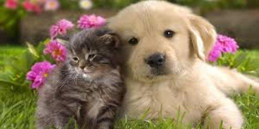 Sahipli kedi, köpek ve gelincikler için pasaport zorunluluğu getirildi