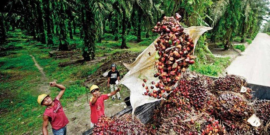 Sri Lanka palmiye yağı ithalatını yasakladı