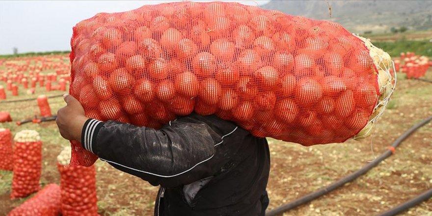 Çiftçinin elinde kalan patates, soğan ve çeltik satın alınıp vatandaşa dağıtılacak