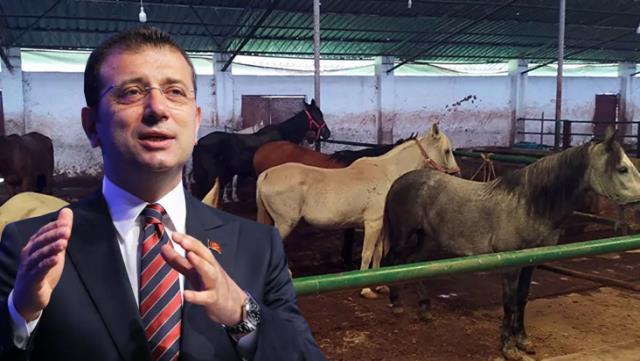 İBB'nin Adalar'dan toplatıp sahiplendirdiği atlar tartışma konusu oldu!