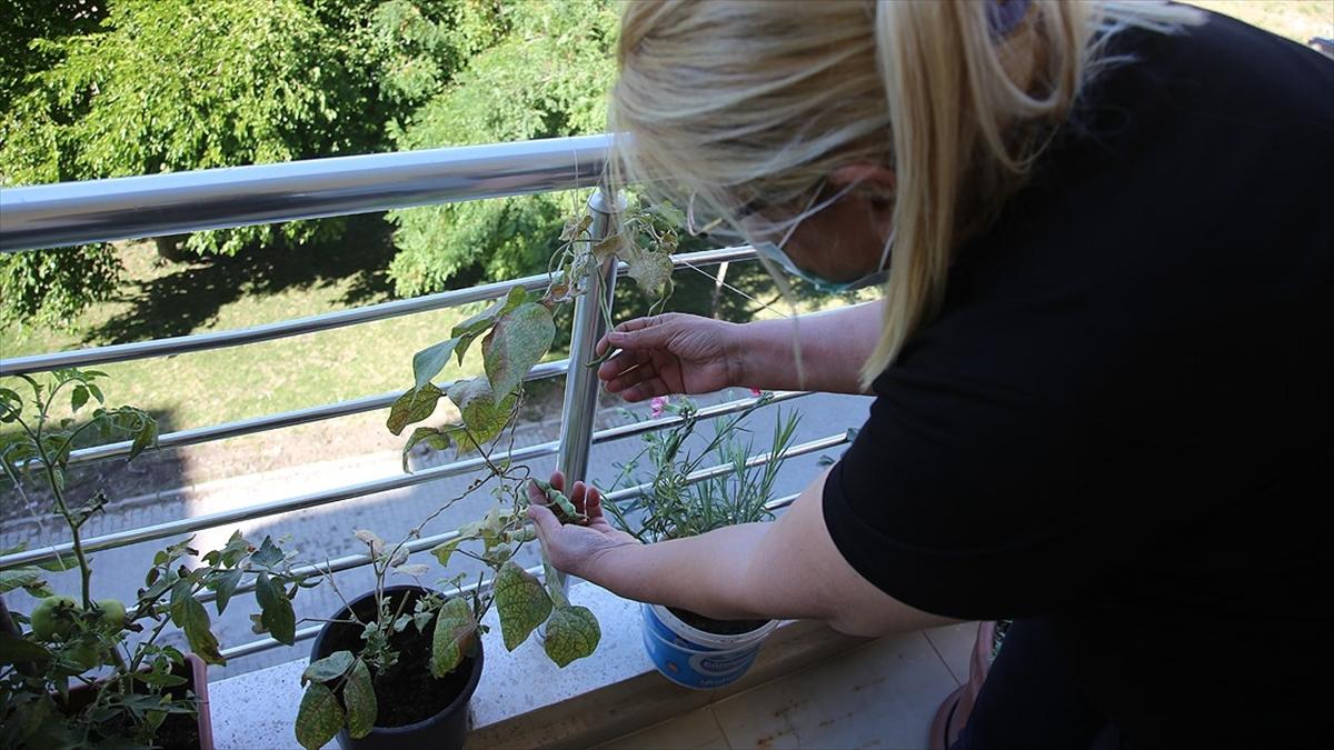 Balkonda Sebze Yetiştirmeye İlgi Arttı, En Fazla Rağbet Çileğe