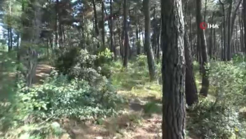 Gencin Cesedi Ormanda Ağaca Asıl Halde Bulundu
