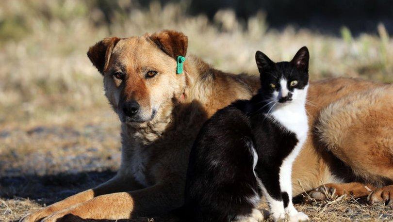 Hayvanları Koruma Kanunu'nda Değişiklik
