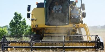 Bakan Pakdemirli Büyükçekmece'de Buğday Hasadı Yaptı