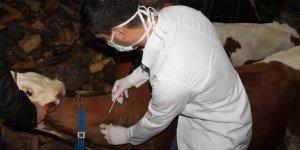 İthal hayvanların sağlık denetiminde veteriner zorunluluğu bitti