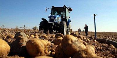 Patates üreticileri: Şu an ithalat yapmayı gerektirecek bir durum yok, adrese teslim bir kararname olmuş