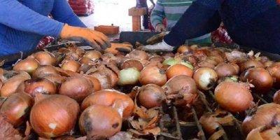 Kapılar açıldı ama soğan yine 10 lira