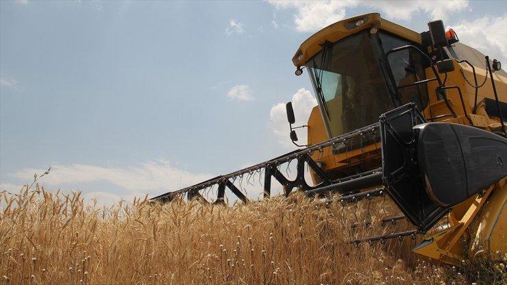 Buğday ve Arpa Satışlarına Başlıyor