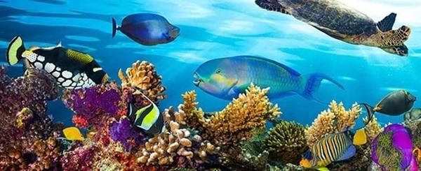 dursun-yildiz-yazdi-denizlerin-ekolojik-dengesini-bozarsak-buyuk-bedel-oderiz,,-001.jpg