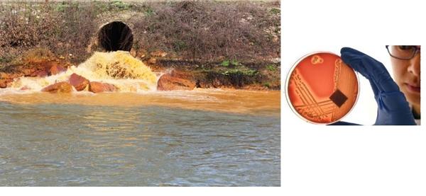 nehirlerdeki-antibiyotik-kirliligi-yeni-bir-kuresel-salgin-riskinin-habercisi,-001.jpg